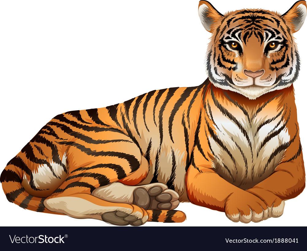 A tiger vector | Price: 3 Credit (USD $3)