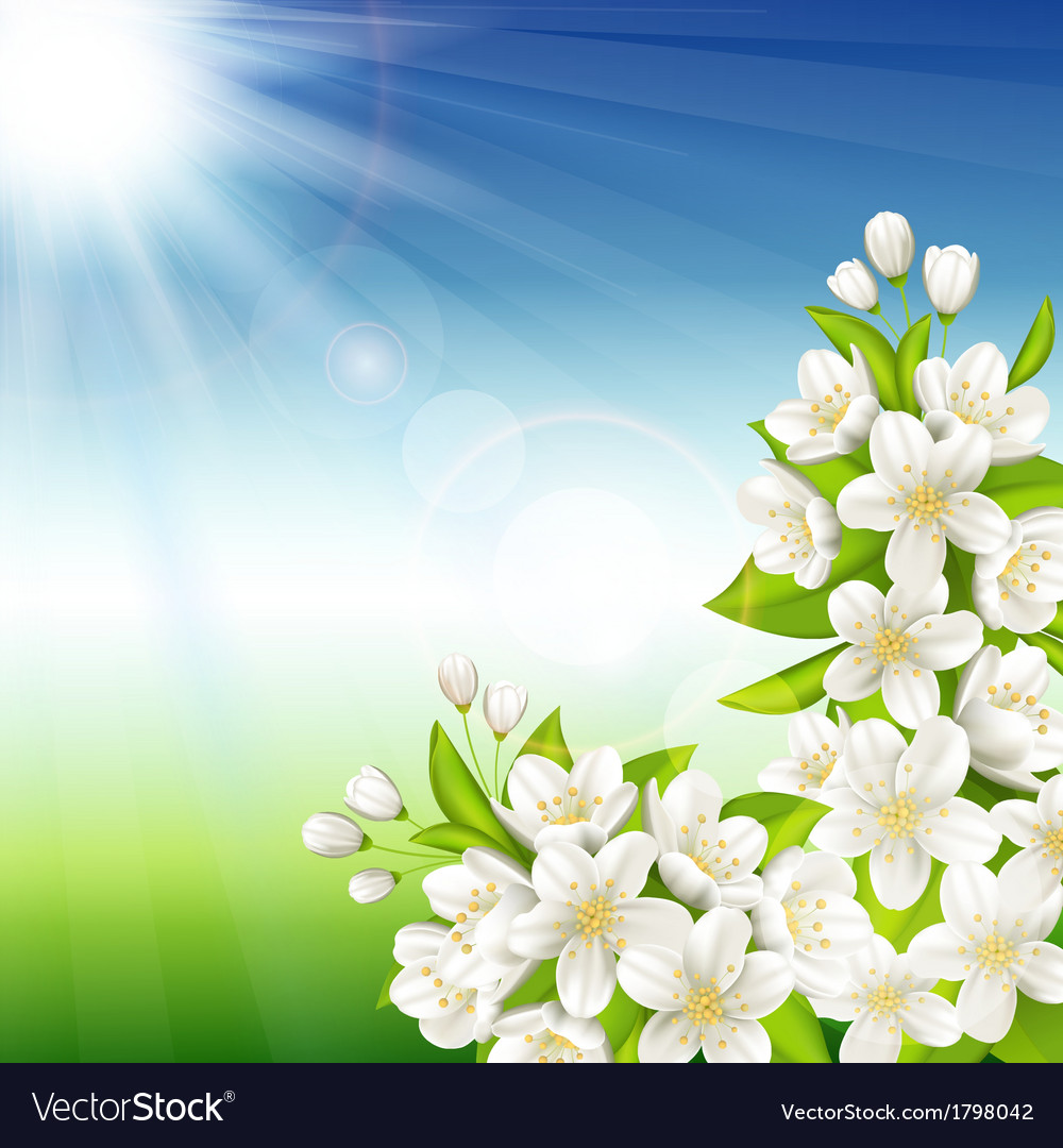 Flowering cherry vector | Price: 1 Credit (USD $1)
