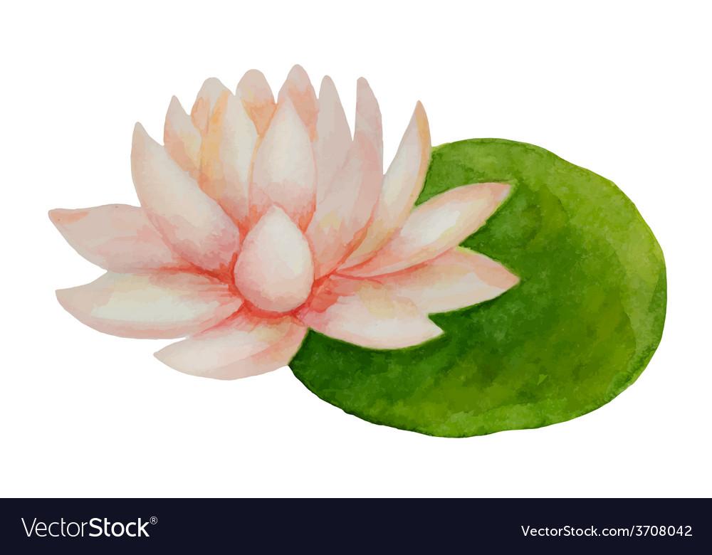 Watercolor pink lotus flower vector   Price: 1 Credit (USD $1)