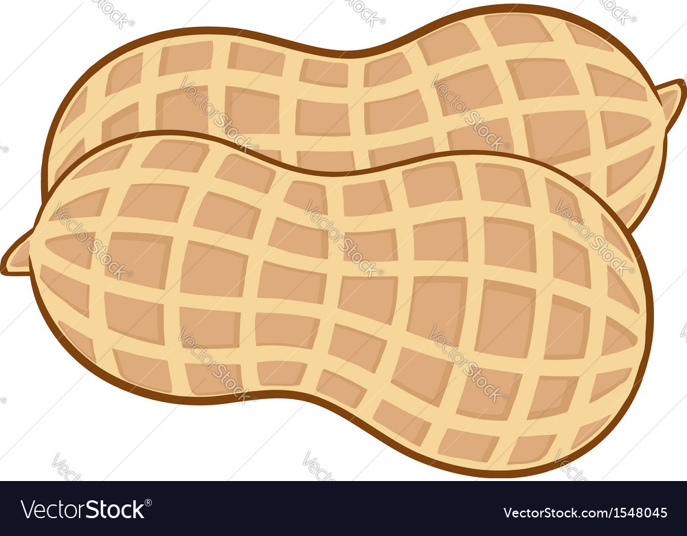 Peanut cartoon vector | Price: 1 Credit (USD $1)