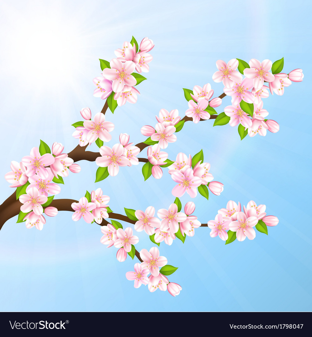 Sakura vector | Price: 1 Credit (USD $1)