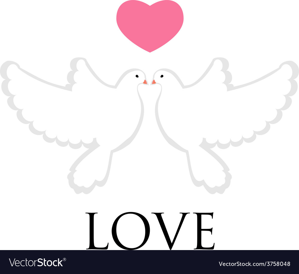 Pair pigeon love vector | Price: 1 Credit (USD $1)