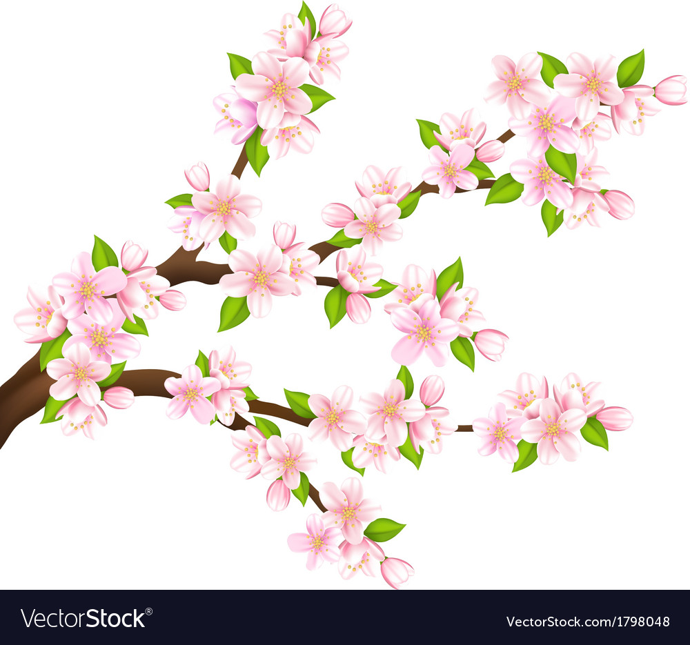Sakura branch isolated vector | Price: 1 Credit (USD $1)