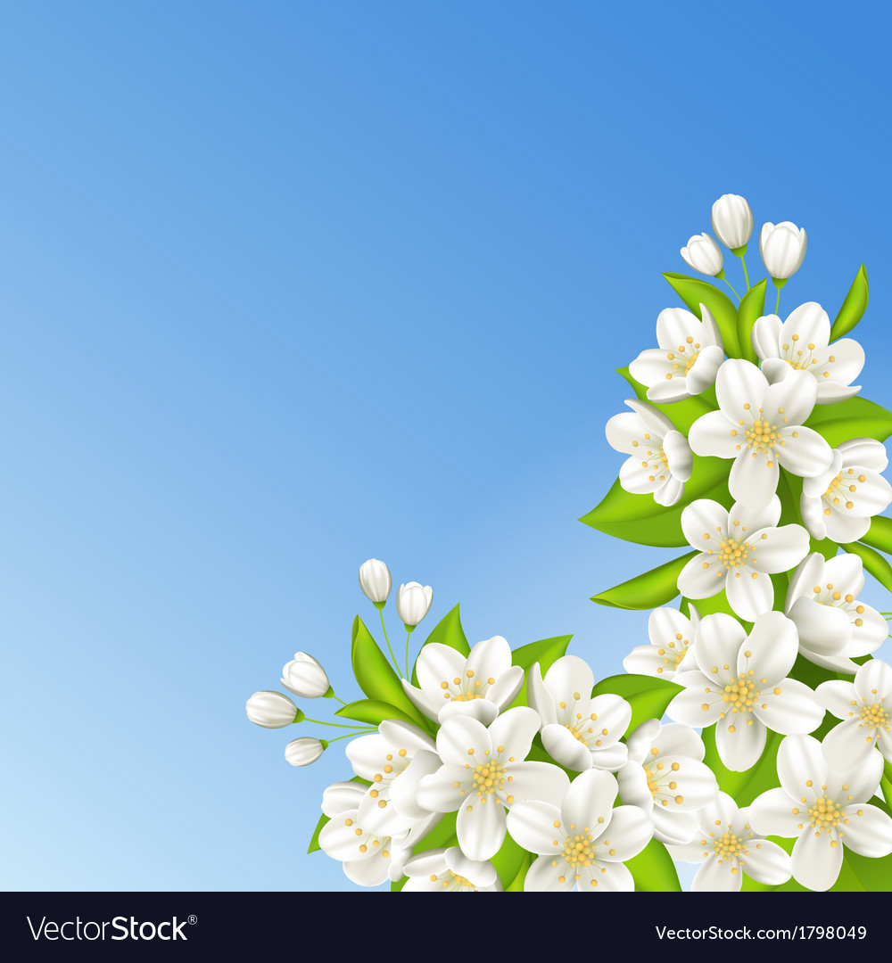 Sakura on the background of blue sky vector | Price: 1 Credit (USD $1)