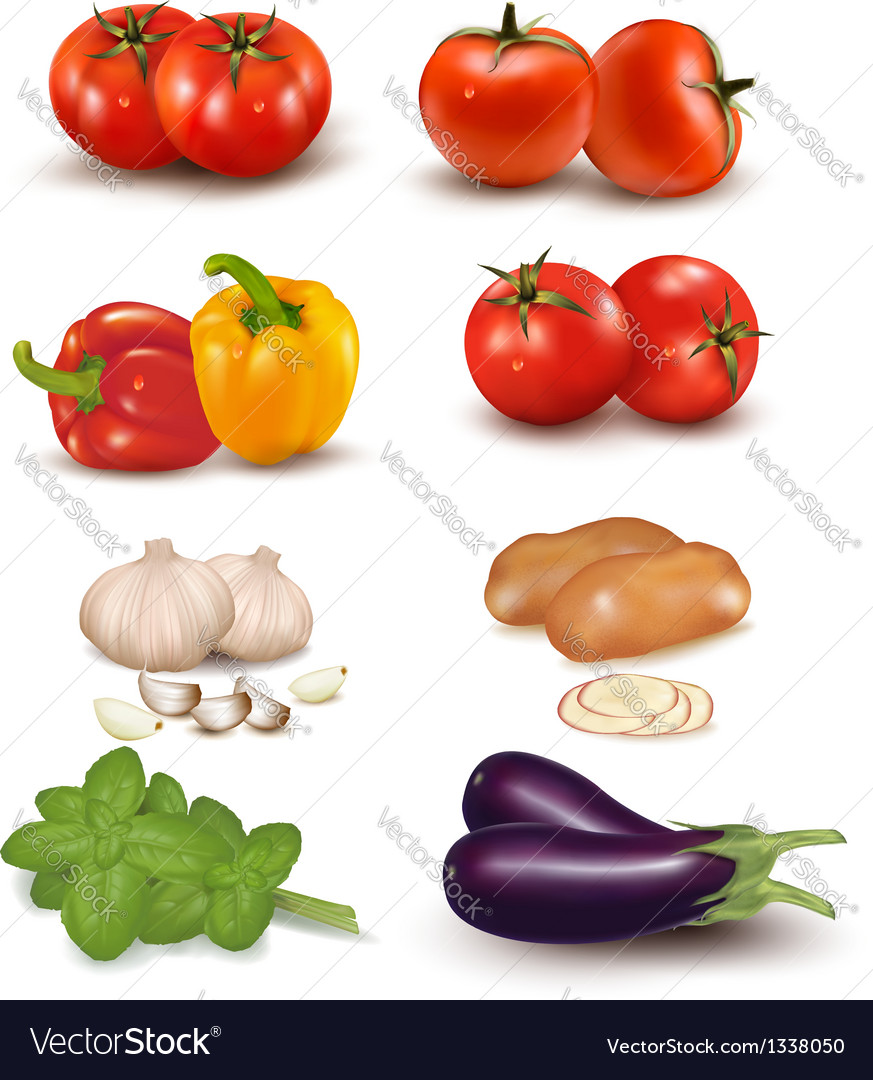 The big colorful group of vegetables vector | Price: 1 Credit (USD $1)
