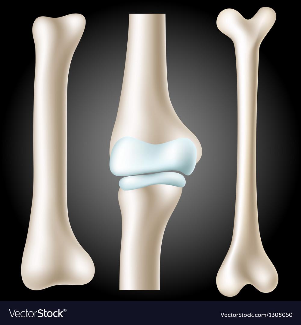 Realistic bone set vector | Price: 3 Credit (USD $3)