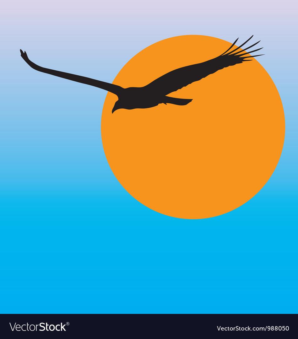 Turkey vulture vector | Price: 1 Credit (USD $1)