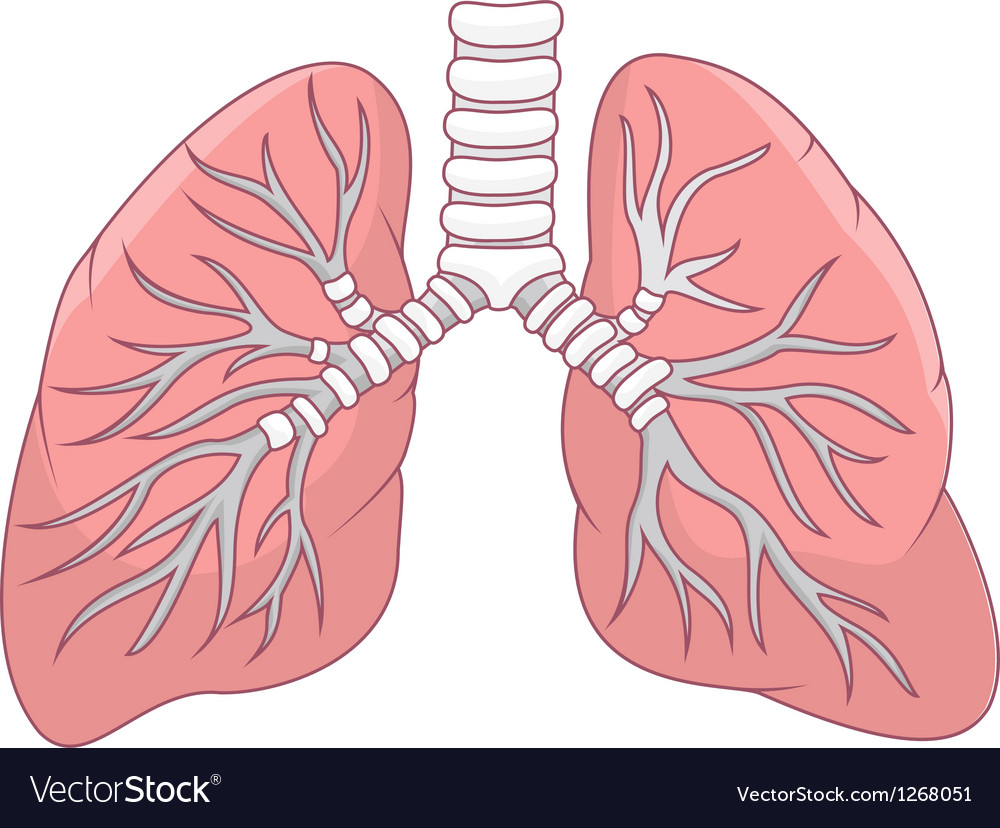 Human lung cartoon vector | Price: 1 Credit (USD $1)