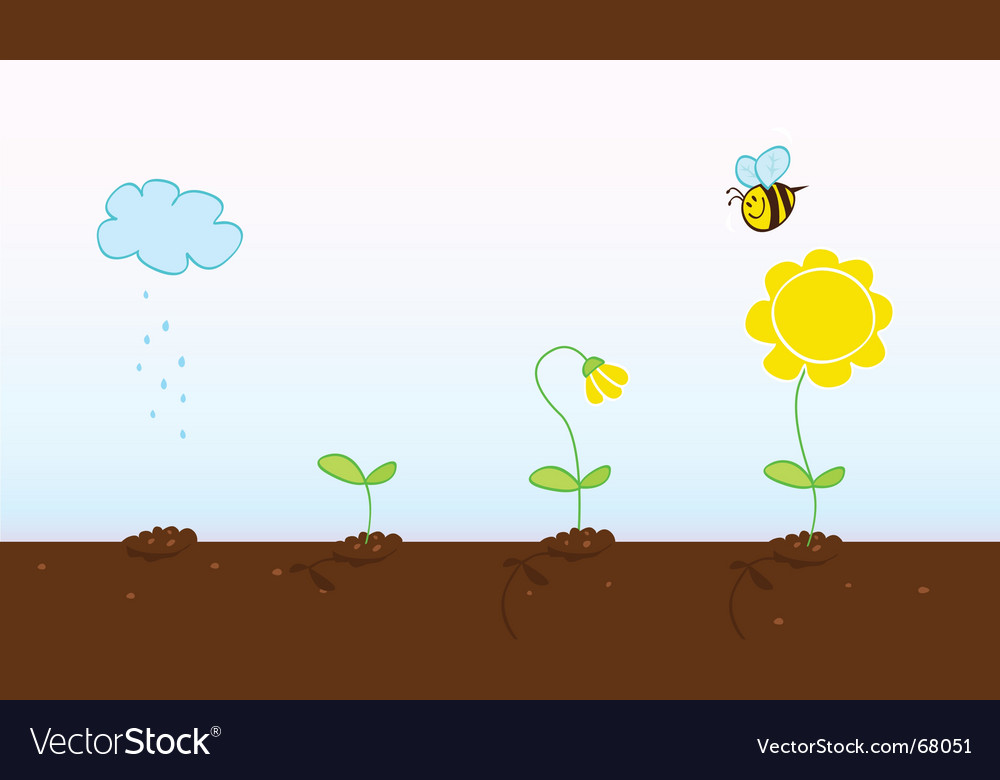 Plant growth process vector | Price: 1 Credit (USD $1)