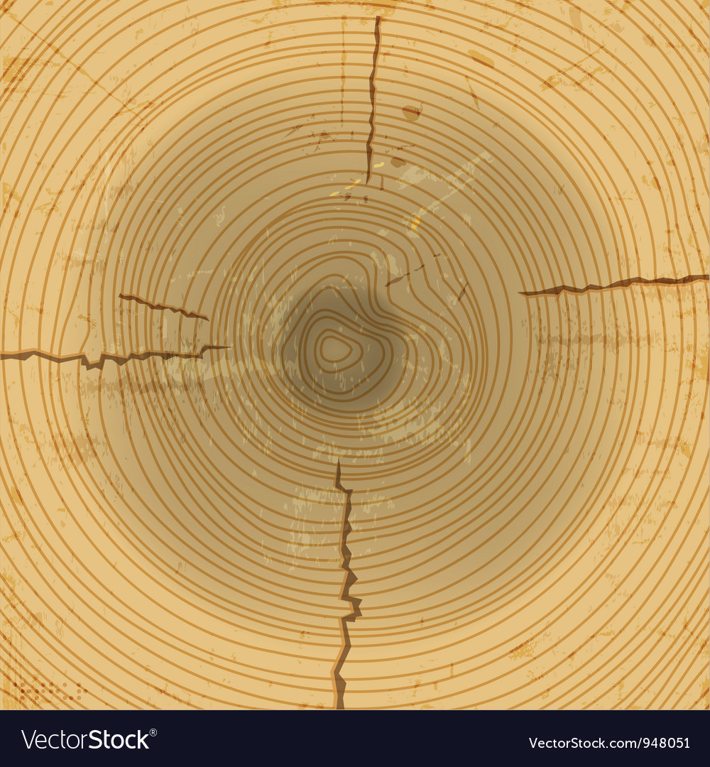 Wood cross section background vector | Price: 1 Credit (USD $1)