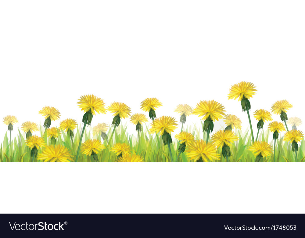 Dandelions flower isolated vector | Price: 1 Credit (USD $1)