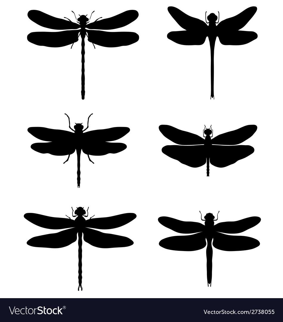Dragonflies vector | Price: 1 Credit (USD $1)