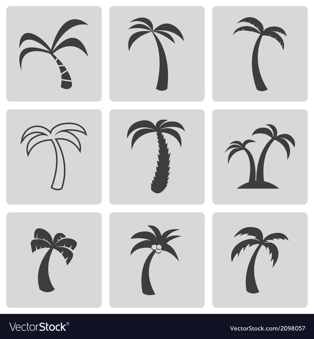 Black palm icons set vector | Price: 1 Credit (USD $1)