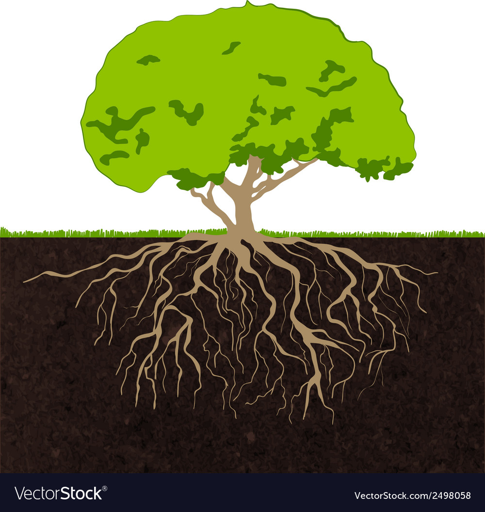 Tree roots sketch vector | Price: 1 Credit (USD $1)