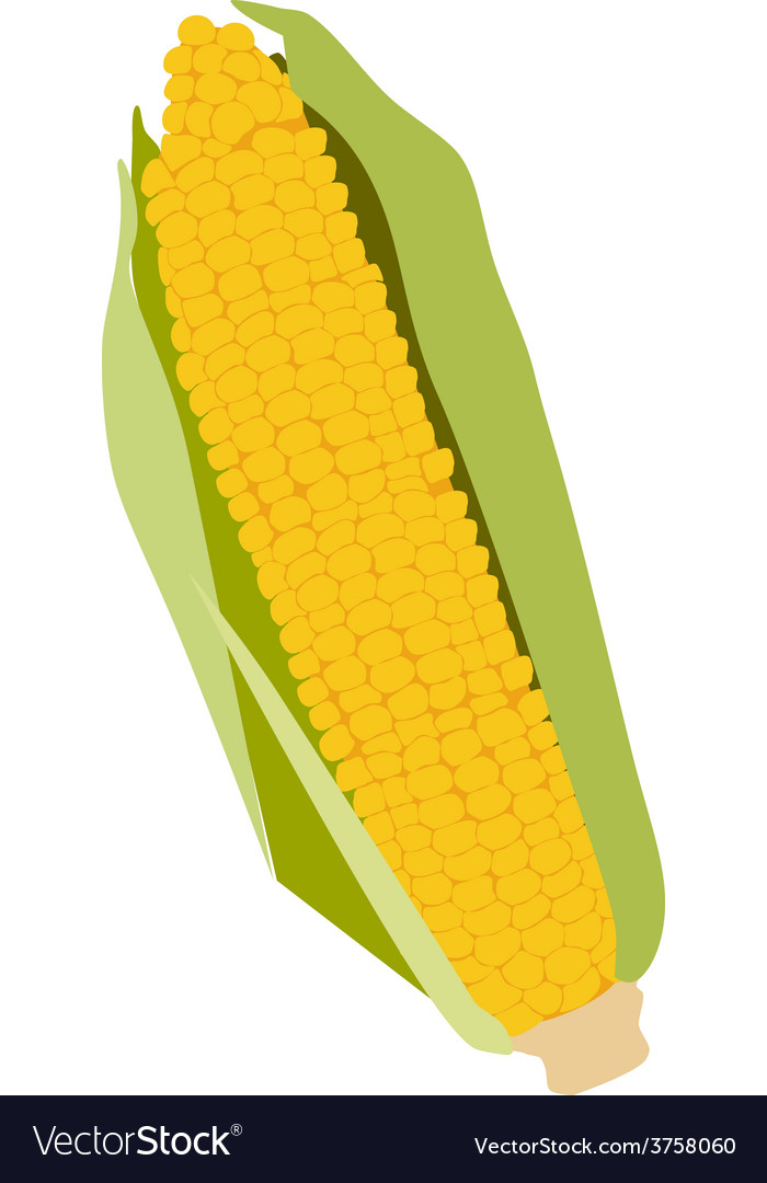Corn on the cob vector | Price: 1 Credit (USD $1)