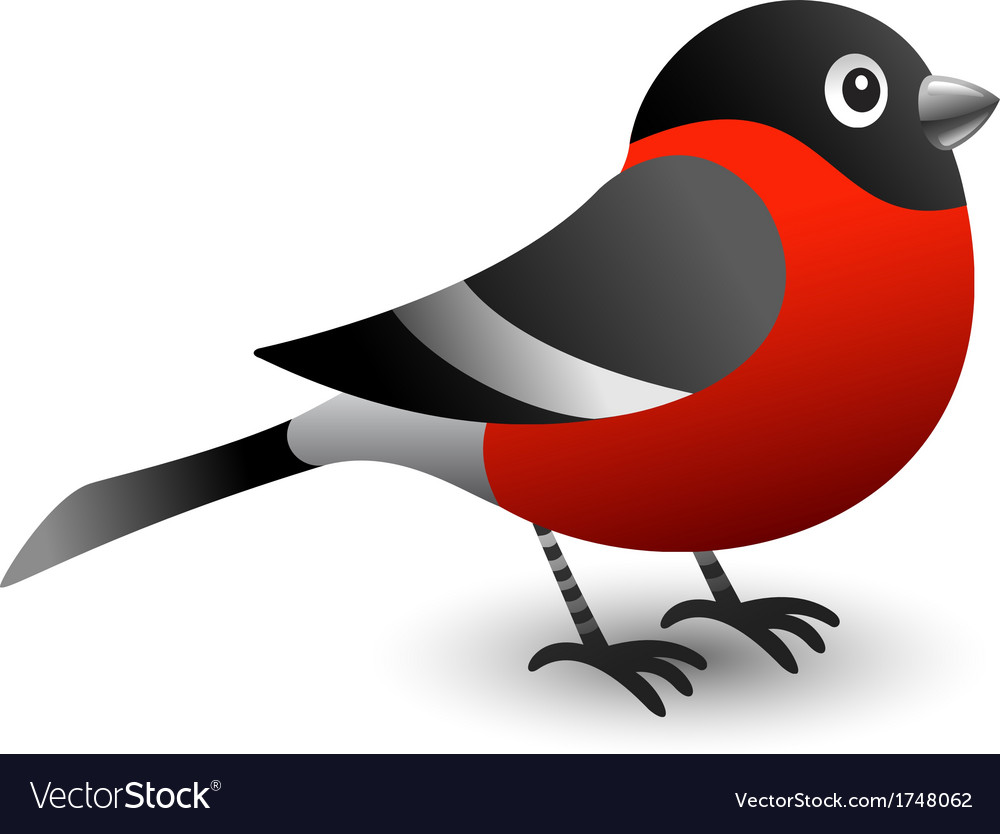 Bullfinch vector | Price: 1 Credit (USD $1)