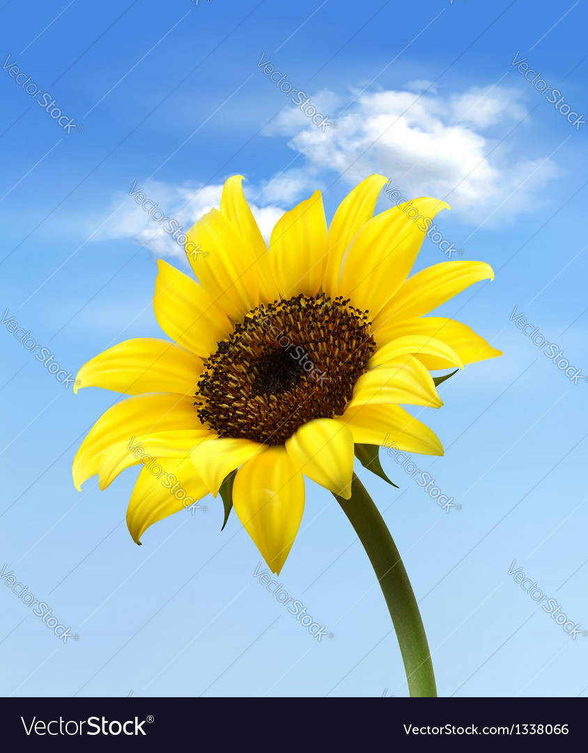 Background with sunflower field over cloudy blue vector | Price: 1 Credit (USD $1)