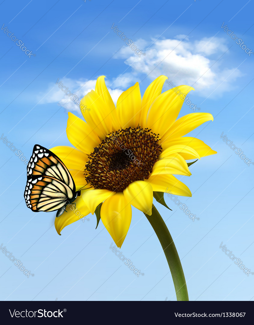 Sunflower with butterfly vector | Price: 1 Credit (USD $1)