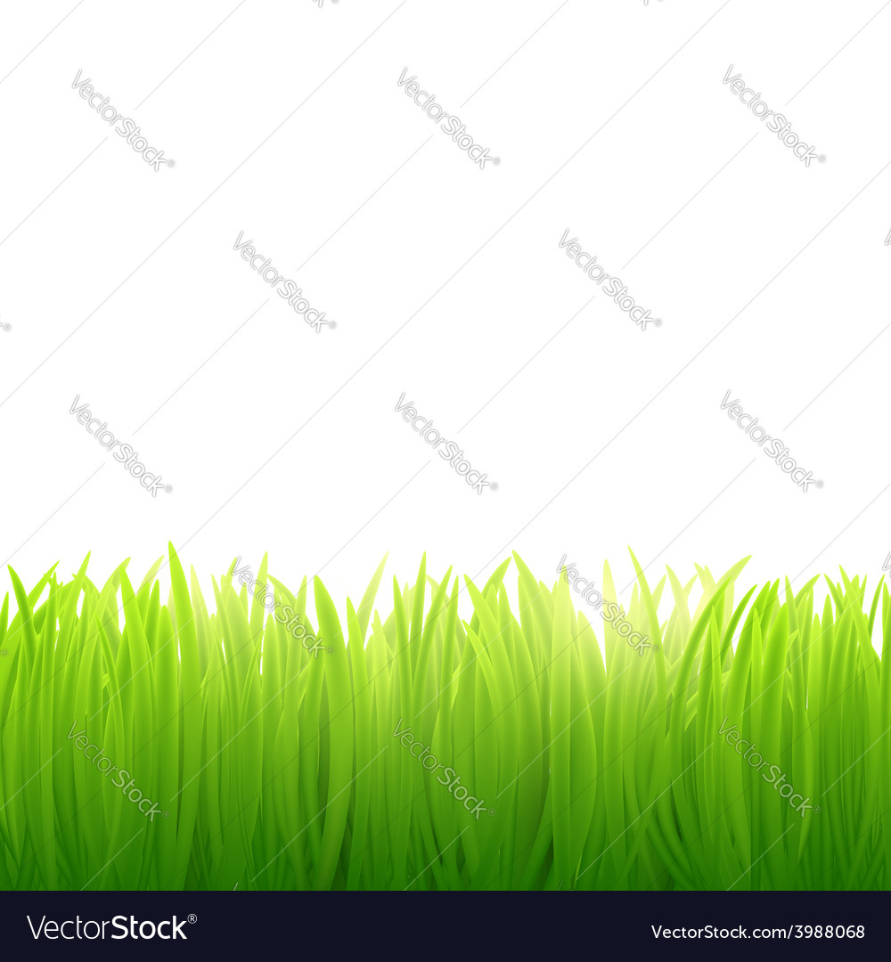 Natural background of grass on white background vector | Price: 1 Credit (USD $1)