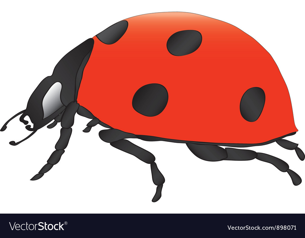 Ladybird vector | Price: 1 Credit (USD $1)