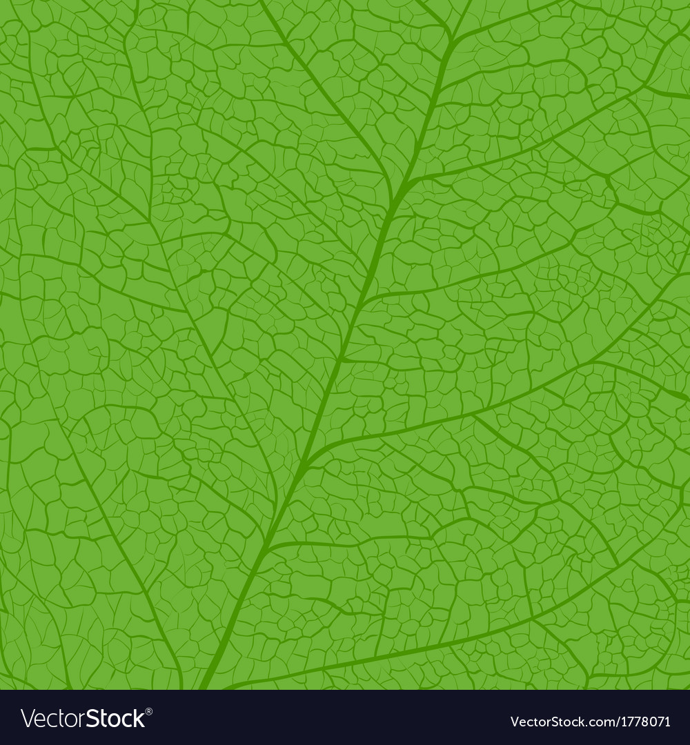 Leaf skeleton vector | Price: 1 Credit (USD $1)