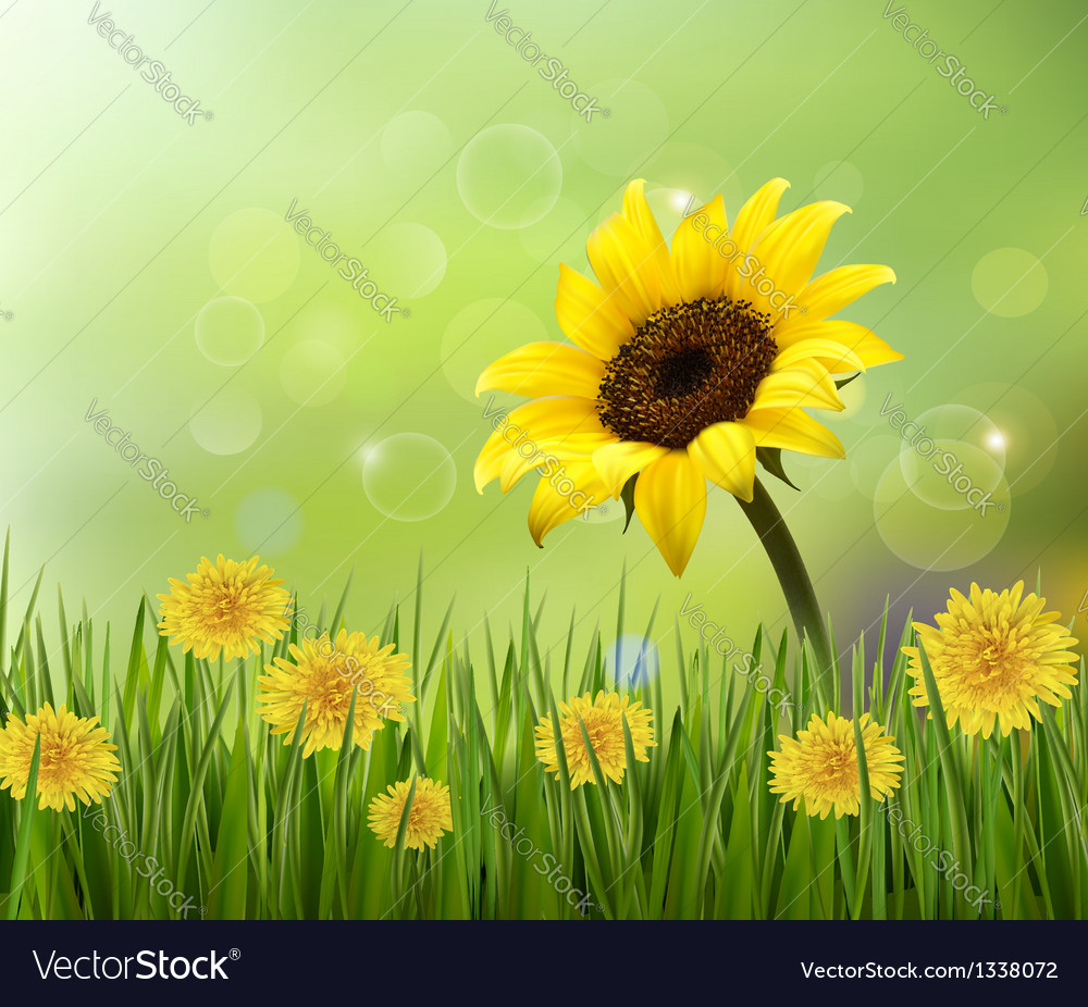 Summer background with yellow flowers and grass vector | Price: 1 Credit (USD $1)