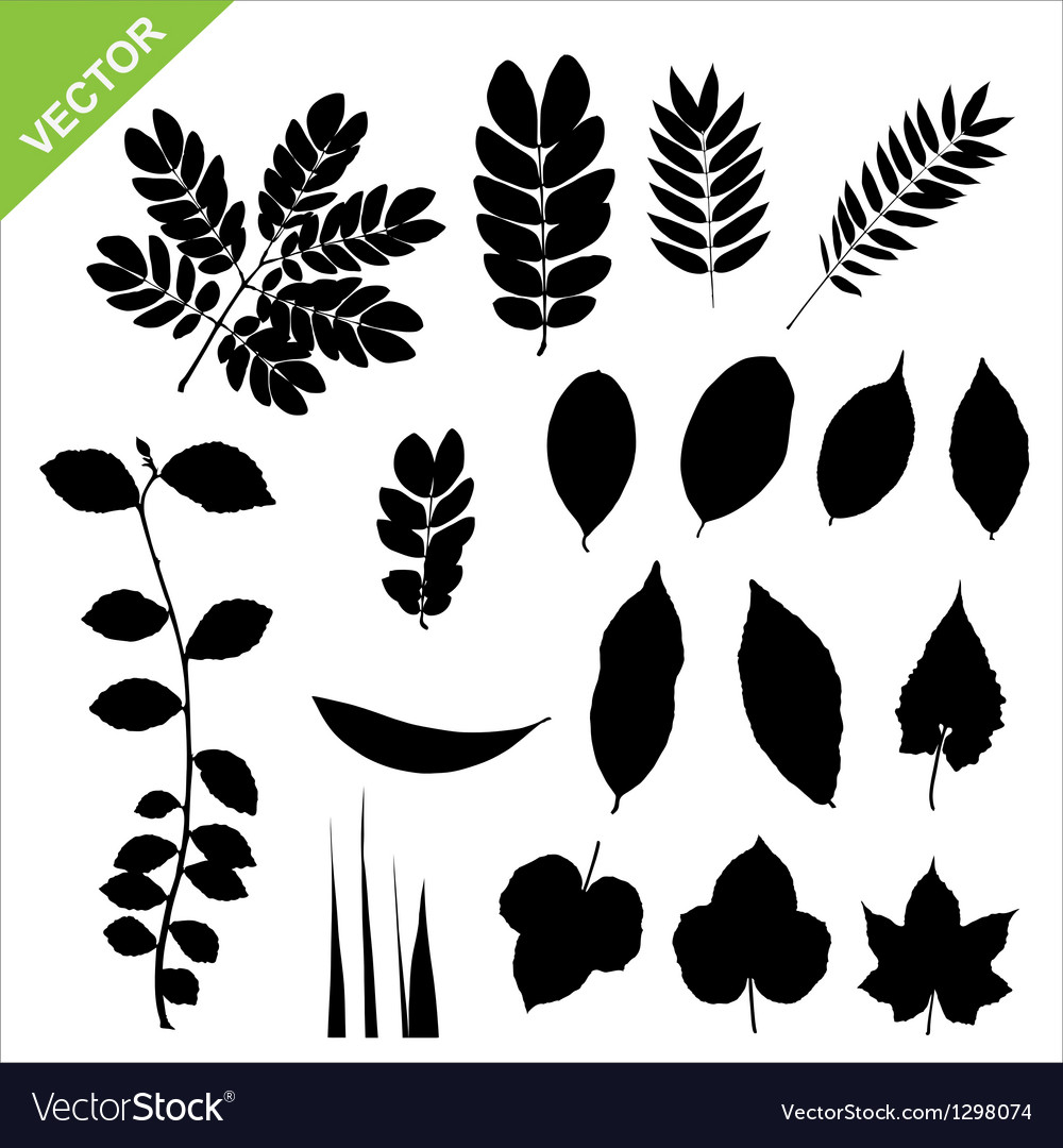 Set of silhouette leaves vector | Price: 1 Credit (USD $1)