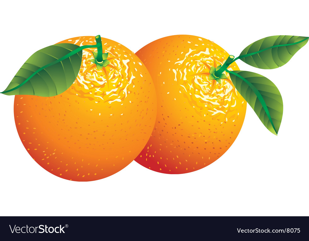 Two oranges vector | Price: 1 Credit (USD $1)