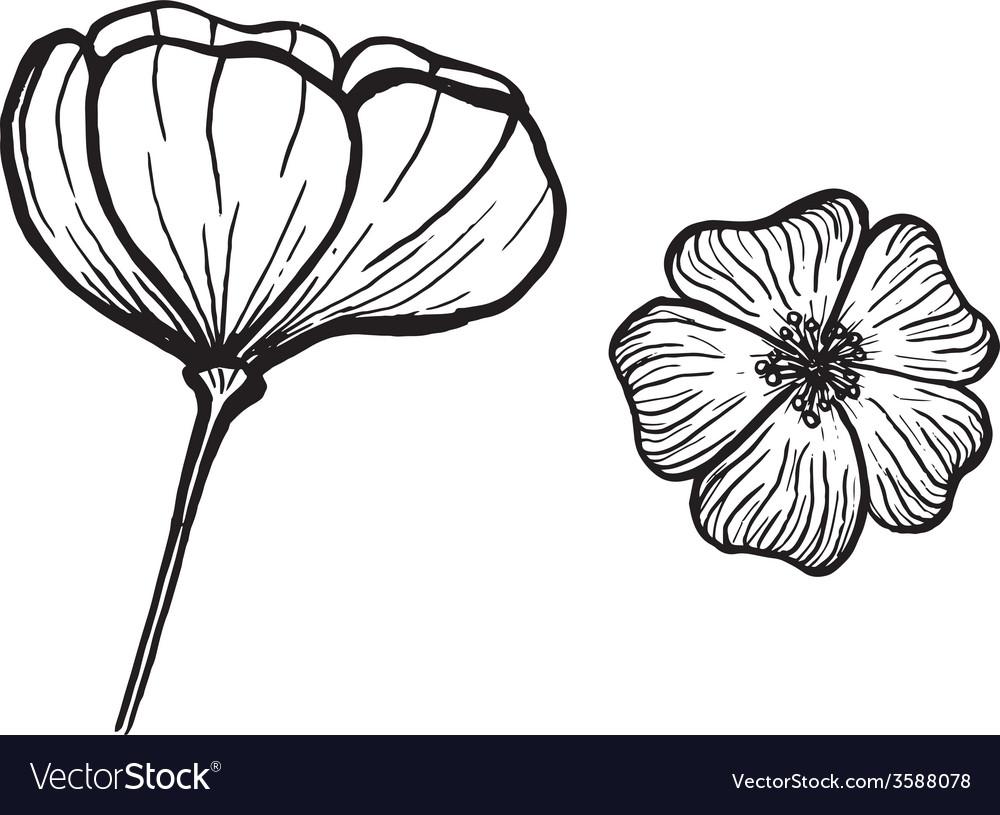 Ink flowers vector | Price: 1 Credit (USD $1)