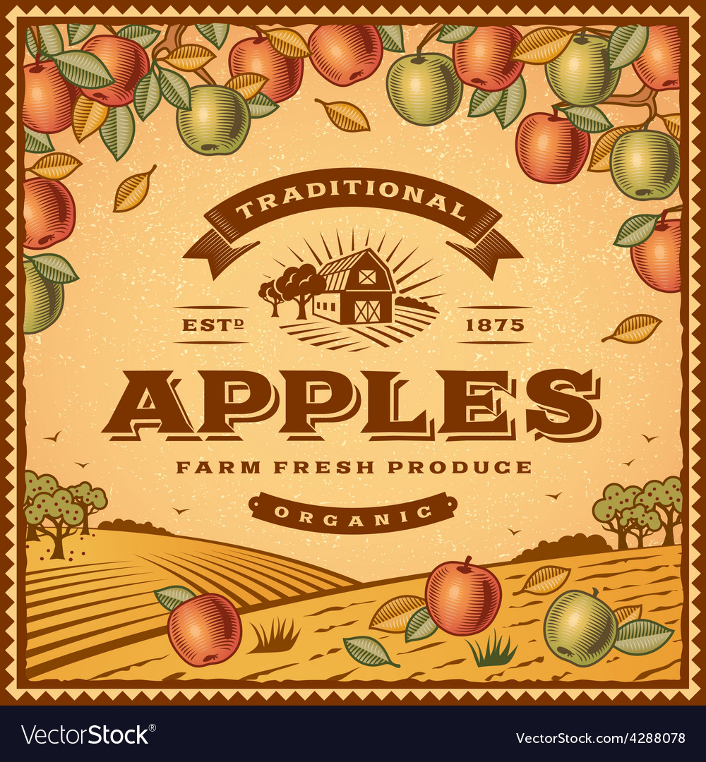 Vintage apples label vector | Price: 3 Credit (USD $3)