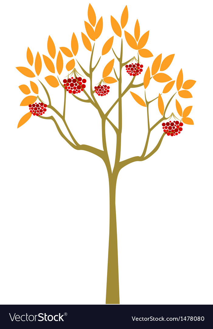 Abstract rowan tree vector | Price: 1 Credit (USD $1)