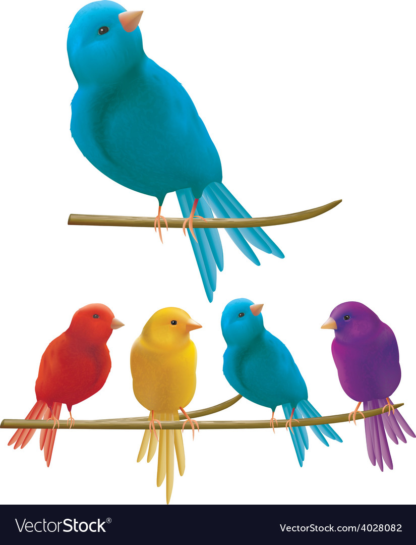 Colorful birds vector   Price: 3 Credit (USD $3)