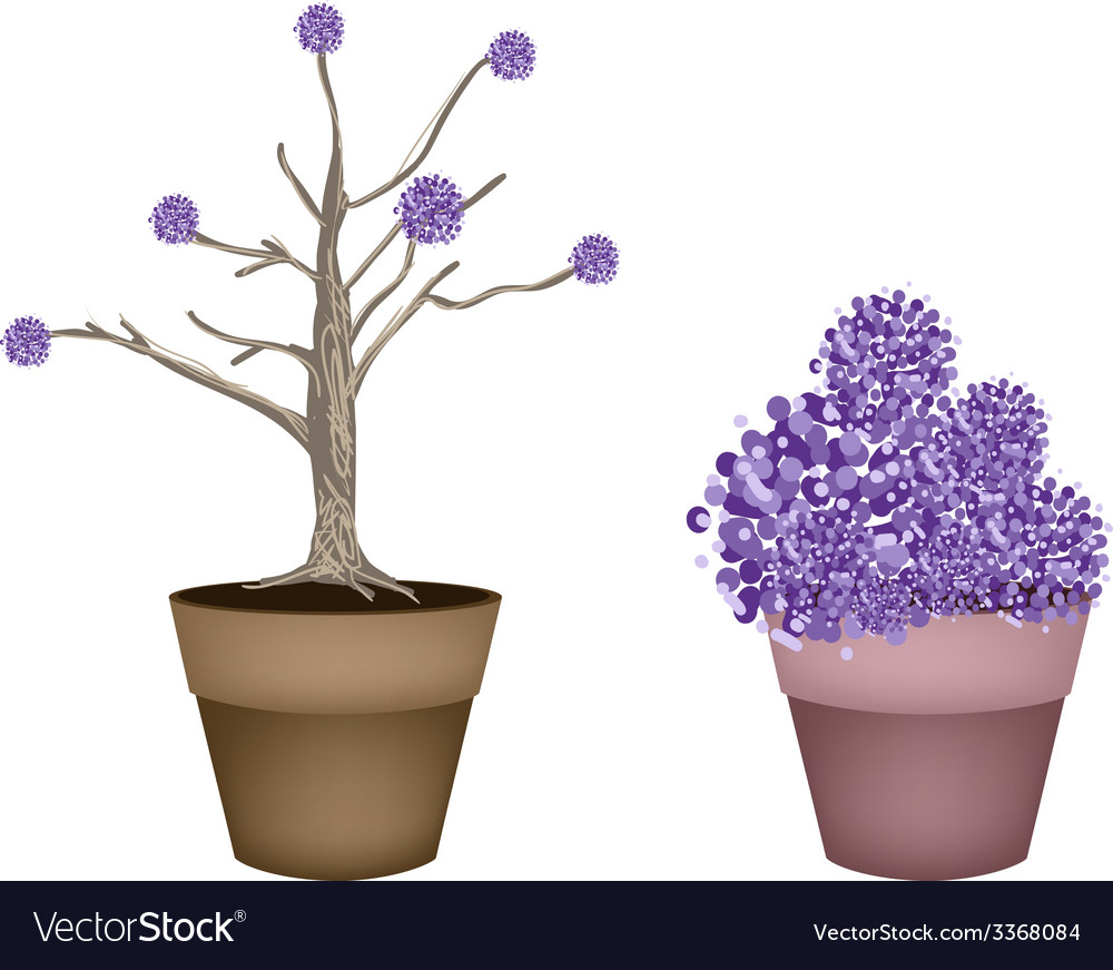 Beautiful purple trees in two flower pots vector | Price: 1 Credit (USD $1)