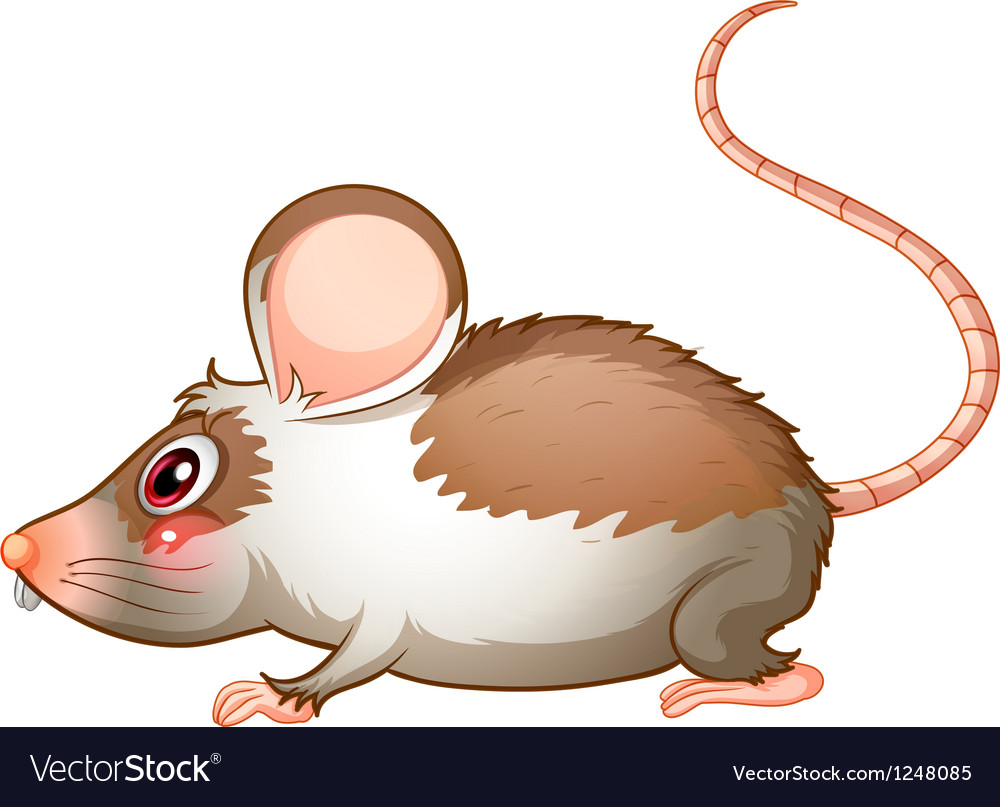 A side view of a rat vector | Price: 1 Credit (USD $1)