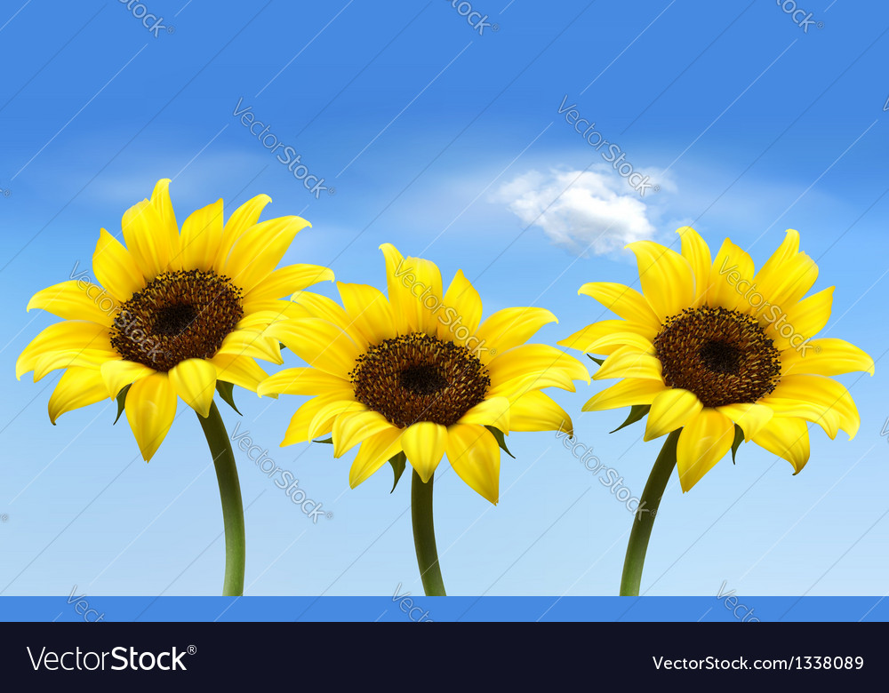 Nature background with three yellow sunflowers vector | Price: 1 Credit (USD $1)
