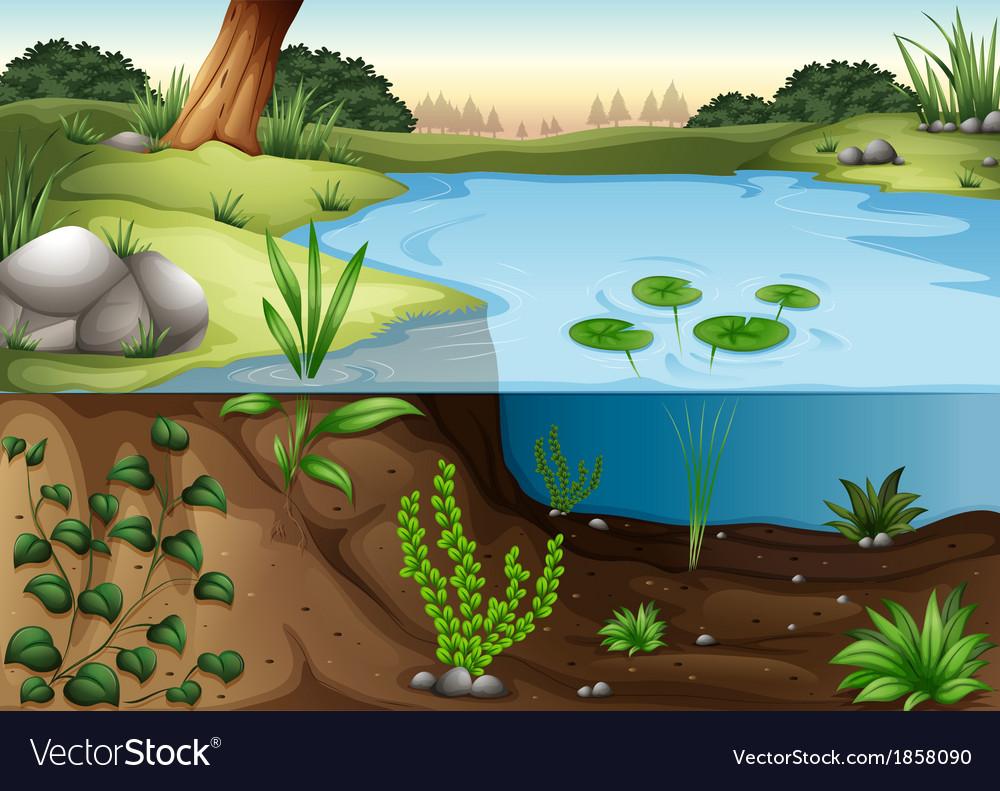 A pond ecosytem vector | Price: 5 Credit (USD $5)