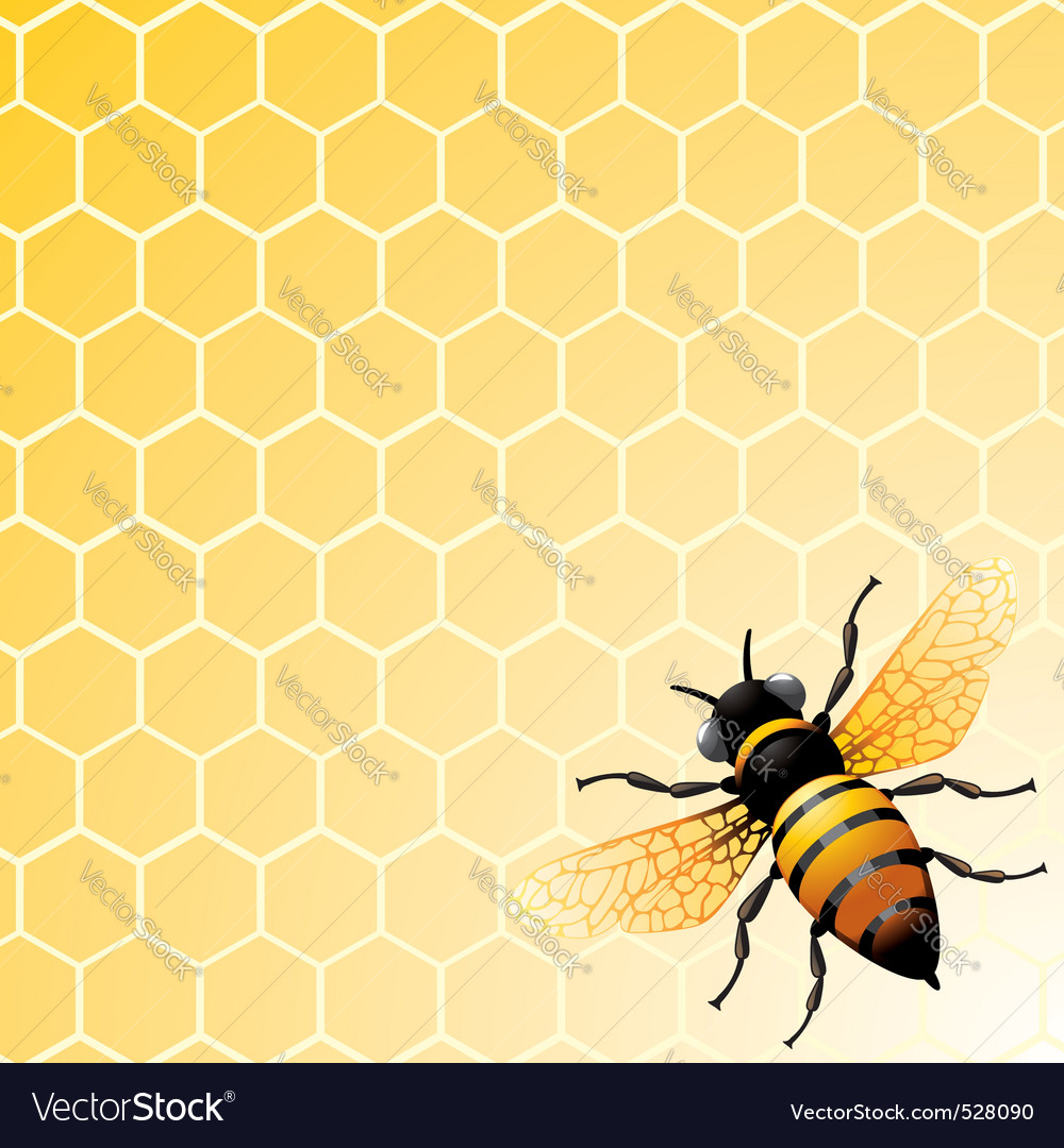 Bee on honeycomb vector | Price: 1 Credit (USD $1)