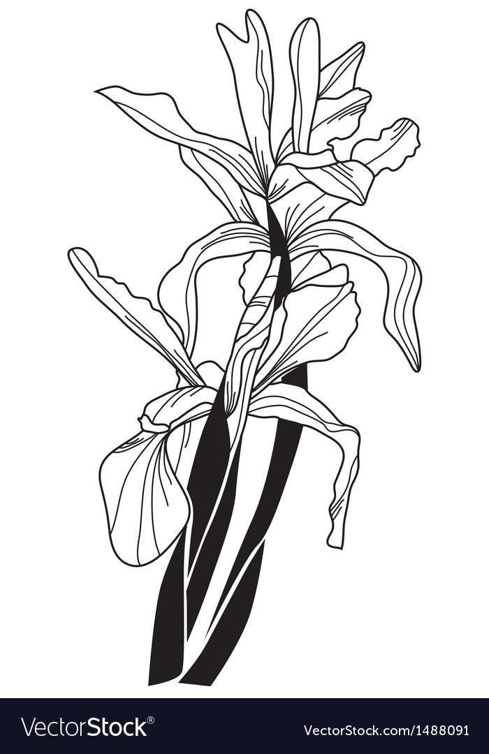 Decorative iris vector | Price: 1 Credit (USD $1)