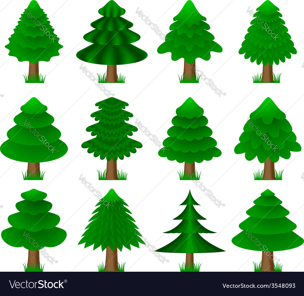 Conifers coniferous trees vector | Price: 1 Credit (USD $1)