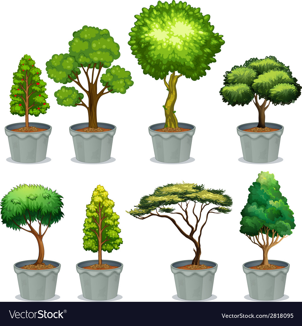 Potted plants vector | Price: 1 Credit (USD $1)