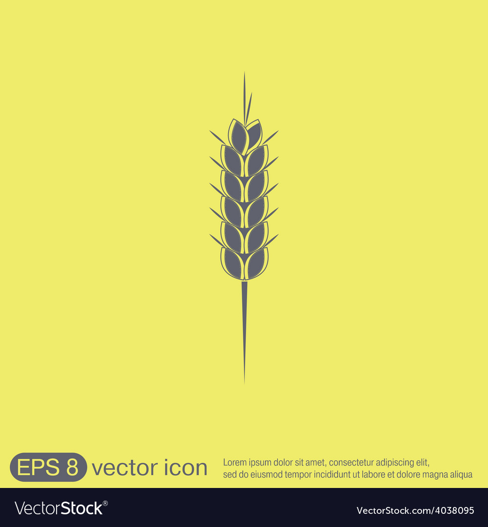 Wheat spike ears icon vector | Price: 1 Credit (USD $1)