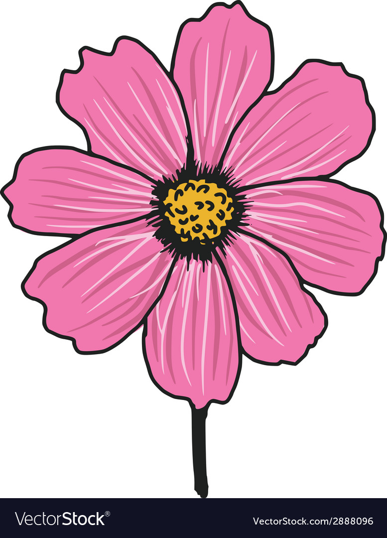 Cosmos aster vector | Price: 1 Credit (USD $1)