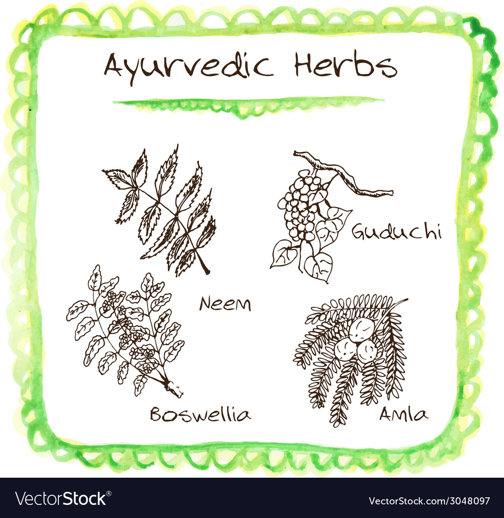 Handdrawn set - ayurvedic herbs vector | Price: 1 Credit (USD $1)