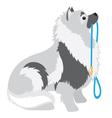 Keeshond leash vector