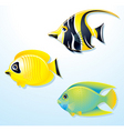 Tropical exotic fishes vector
