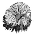 Bird bald eagle head vector