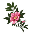 Wild rose flower on a white background vector