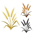 Ears of wheat rye or barley decorate element set vector