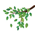 Green leaves tree branch2 vector