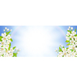 Banner with flowering cherry vector